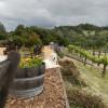 Vida Buena Farm