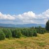 Mountain Top Christmas Tree Farm