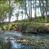 Tallowood Creek