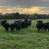 Camp Experience on a Cattle Ranch