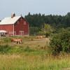 Carnation Tiny House Farmstay