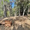 Forest Sanctuary - Campsite #4