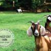 R & R at The Shaggy Goat Farm Stay