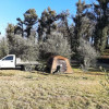 Sarscany Olive Grove Sarsfield