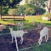Rabbit Hill Farm