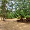 Alpaca Woodland