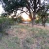 Camping with vineyard views