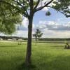 Beautiful oak field in the country