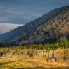 Similkameen Wild Vineyard by River