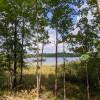 Bob Lake #1 - Waterfront Birch