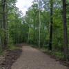 Bob Lake #2 - Wooded Lot