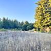 Majestic Redwood Grove & Meadows #5