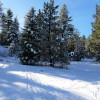 20 Wooded Acres-RV-Horses Welcome