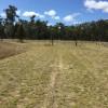 Kogan Pine & Forest Camp