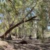 Warrambool Bushland & Creek Camp