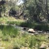 Beaver Creek Oasis