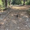 Peace in the Cedars