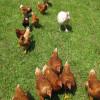 Five Star Farm Life+River TripsHere