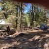 Tall pines #2/hammocks/picnic table