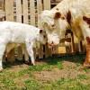 Tuff's Ranch