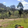 Bluegum Valley Camping