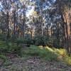 Forest Edge Campsite