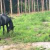 Outer Banks Horse Farm